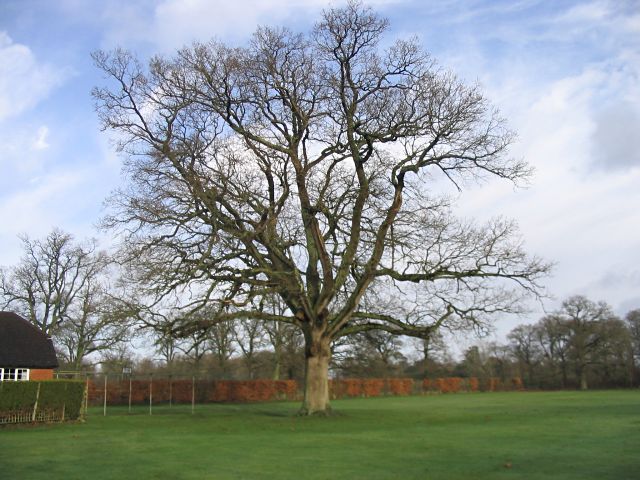 cricket_pitch_with_large_oak_tree_-_geograph-org-uk_-_660800